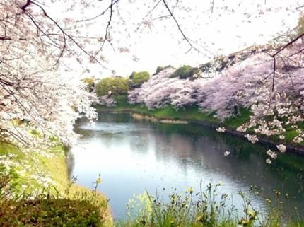 千鳥ヶ淵のボートで夜桜デート!お勧めカフェやアクセス方法