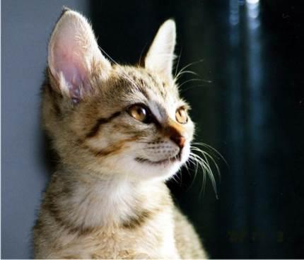 目が綺麗なネコ
