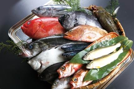 たくさんの鮮魚