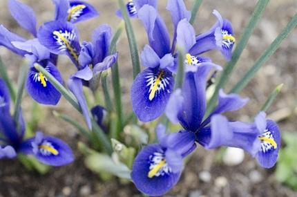 きれいな供花