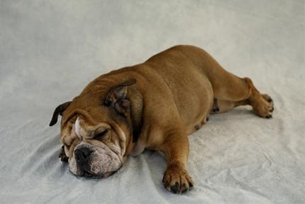 昼間の眠気は危険かも?!眠気から見る病気の症状!