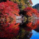大阪に住んだら知っておくべき!関西の紅葉名所ランキング5選!