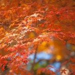 日本有数の紅葉スポット!十和田湖の見ごろ時期やお勧めの場所!