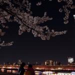 一度は行くべき!桜の名所、東京ランキングトップ7!