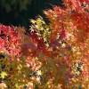 童謡[もみじ]歌詞の意味は?秋の山と渓流に流れる美しさが心温まる