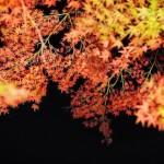 滋賀は琵琶湖だけじゃない!マッタリできる紅葉の名所と観光情報5選